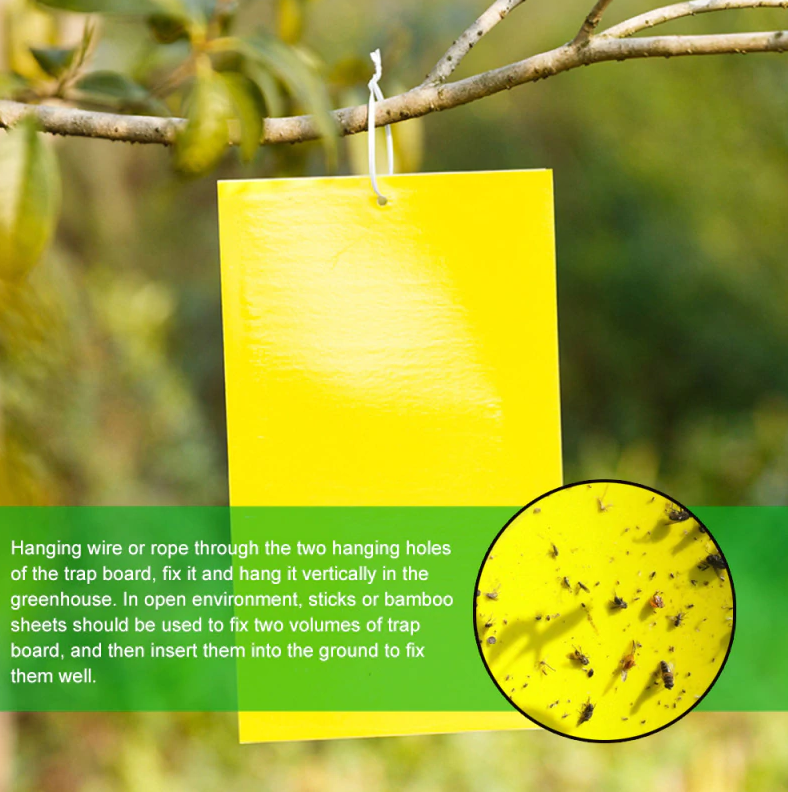 Sticky Traps for Flies